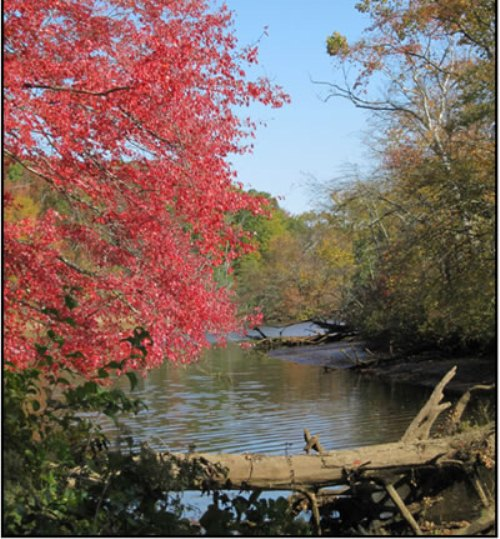 Fall foliage by the creek
