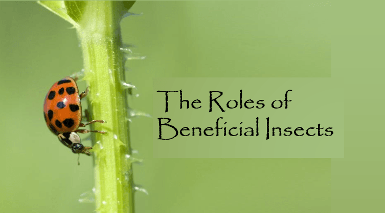 beneficial insects title slide