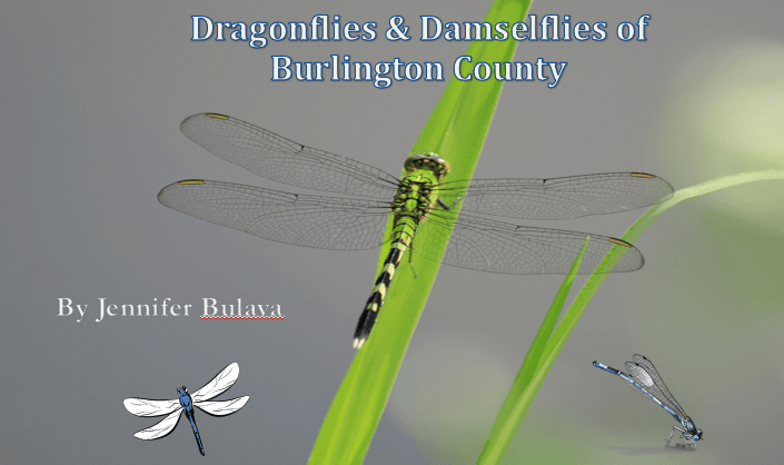 dragonfly title slide Opens in new window